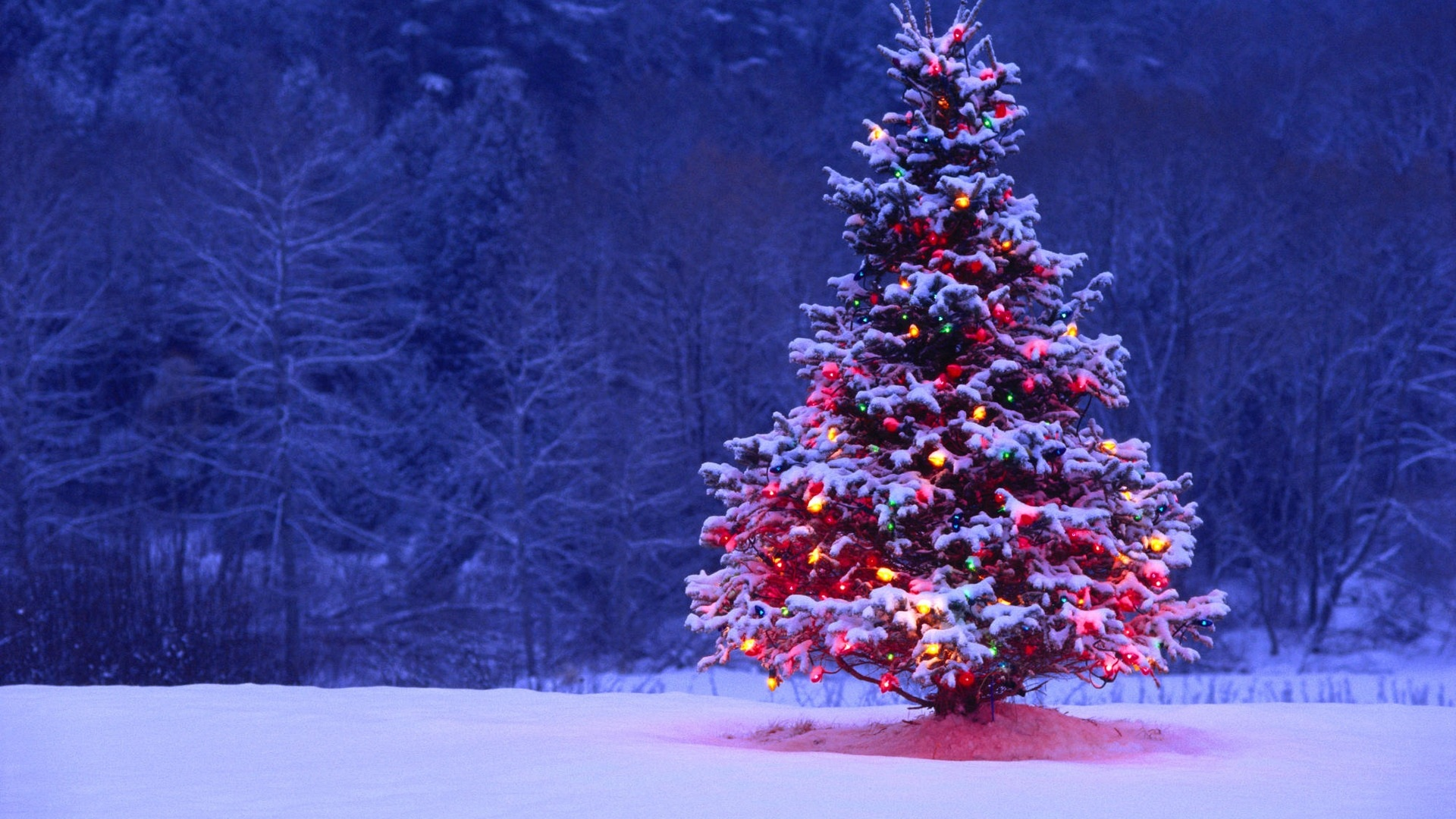choose the perfect christmas tree for the holidays